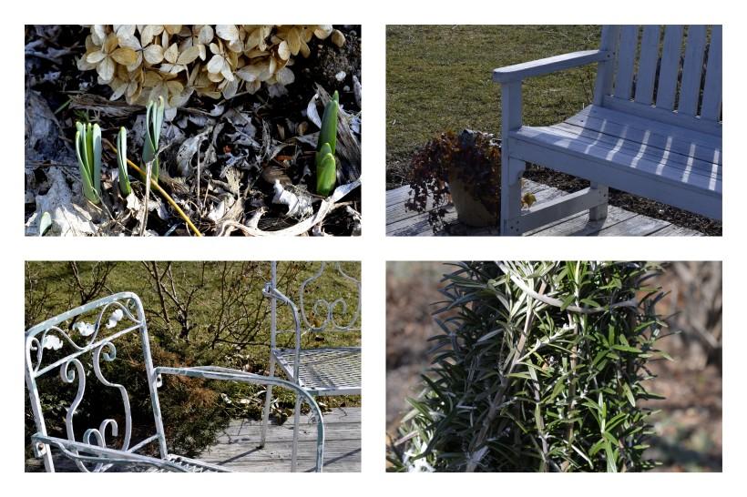 2013-01-30 puutarhassa