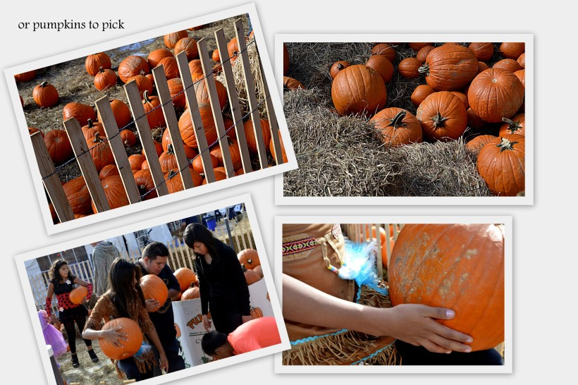 pumpkins at fair