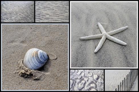 shells 0n beach
