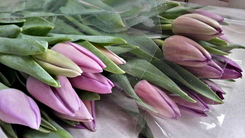 lavender tulip 1