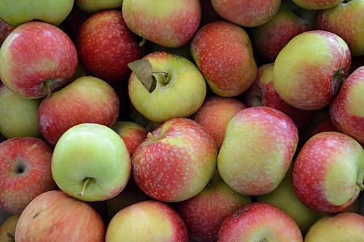 hedelmä, omena, jonahan, irma weisel