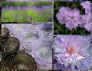 soft lavender