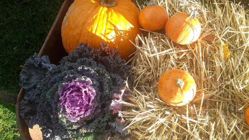 november pumpkins