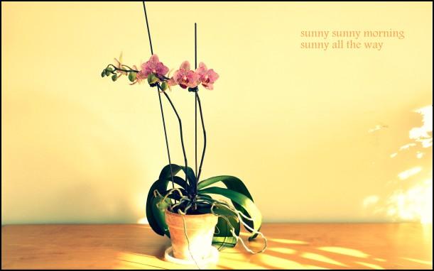 sunny sunny morning