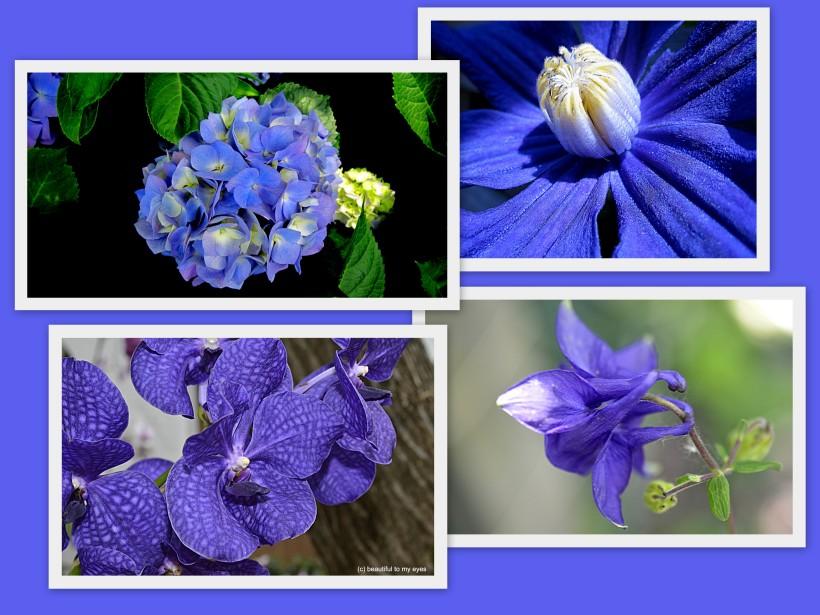 sininen #1