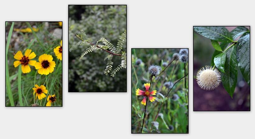 wild flowers texas