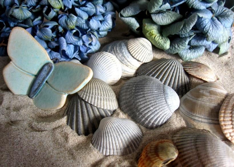 seashells 2 (13) blog