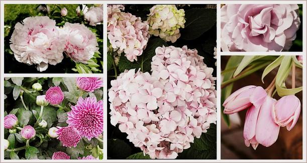 2013-06-05-pink-peoni-front-yard