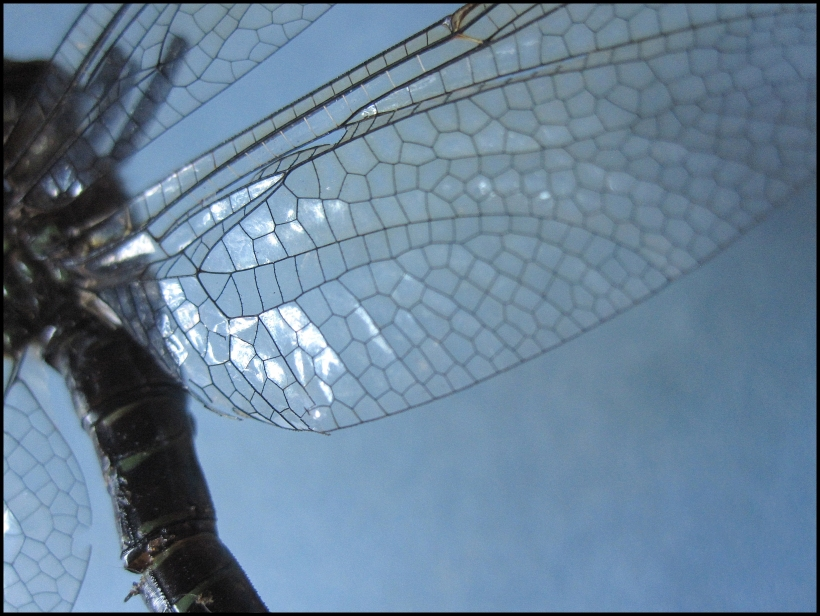 dragon fly 016 blog